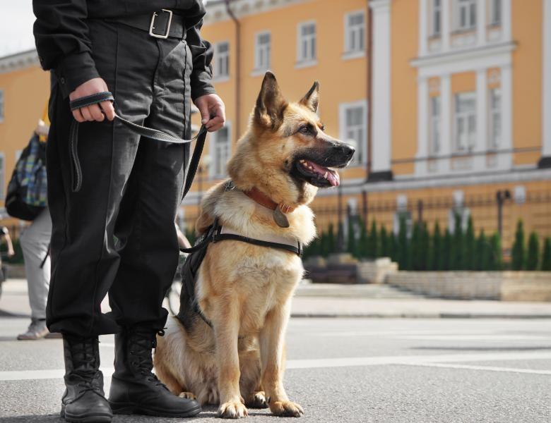 Este oficial! Animalele de serviciu vor beneficia de îngrijire pe viață