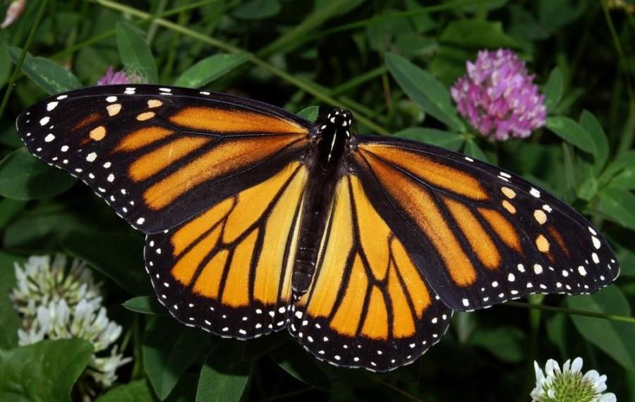 """""""Apocalipsa insectelor"""". 400.000 de insecte ar putea să dispară în viitorul apropiat"""