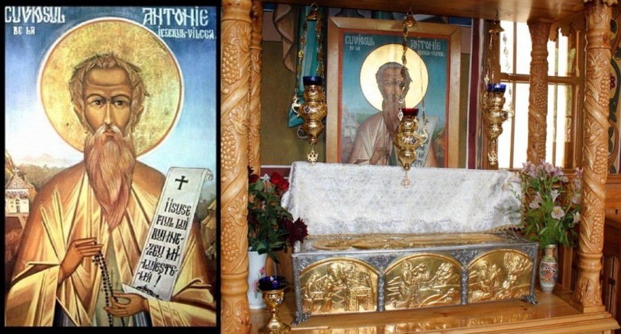 Sfântul Cuvios Antonie de la Iezerul-Vâlcea, Pomul cu multe Roade crescut din pământ românesc