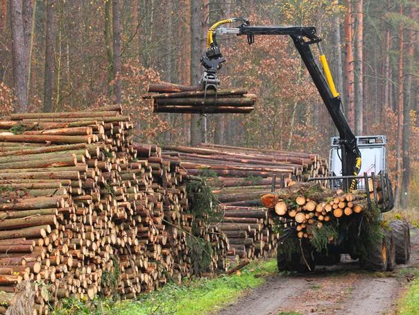 România pierde în fiecare oră peste 3 hectare de pădure