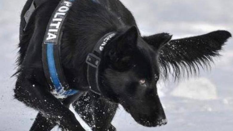 Ea este Teba, câinele polițist care a prins autorul dublei crime de la Satu Mare în doar patru ore