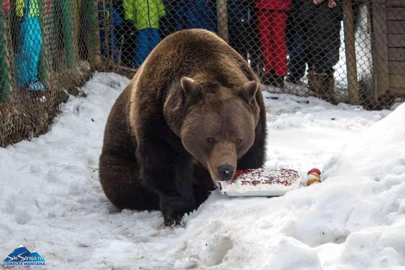 Ursul Baloo, vedeta stațiunii Straja,  împlinește 20 de ani
