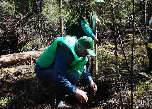 """""""Românii plantează o pădure cât o ţară"""". 50 de milioane de puieţi vor fi plantaţi la nivel național"""