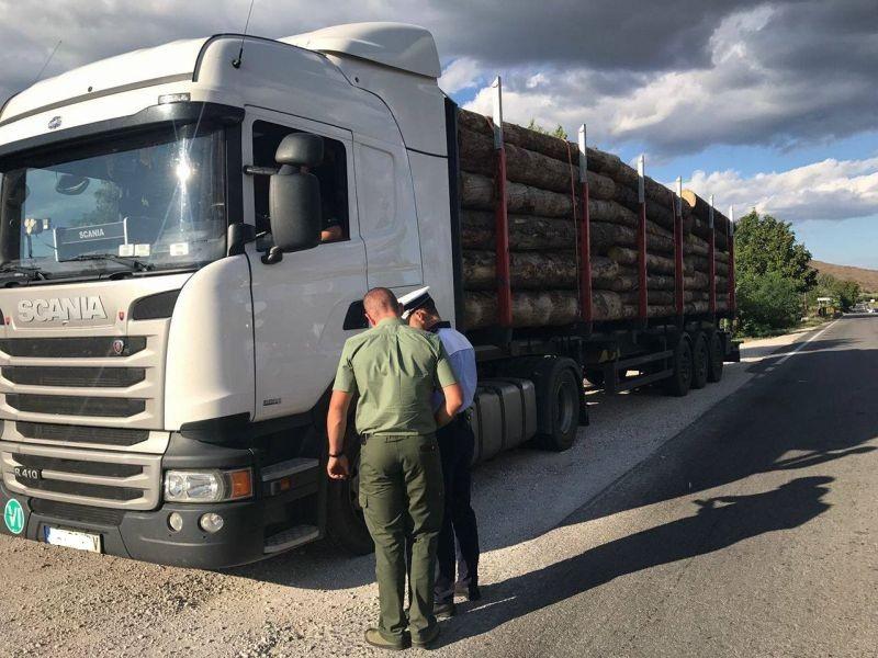 700 de controale și peste 100 de dosare penale pentru tăiere ilegală de arbori, în ultima săptămână