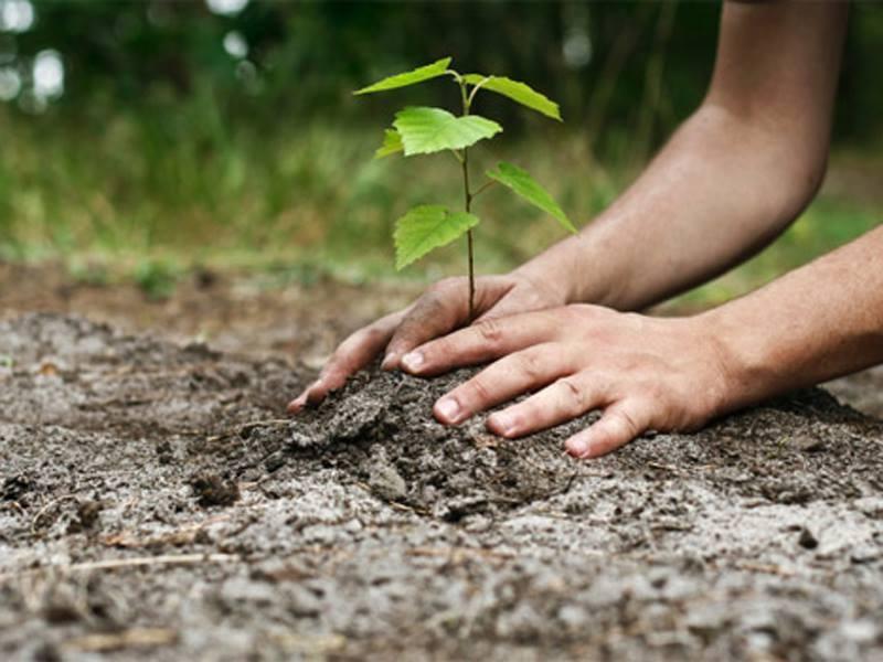 """""""Plantăm fapte bune în România"""". Peste 260.000 de puieţi au fost plantaţi pe 59 de hectare, în lunile martie și aprilie"""