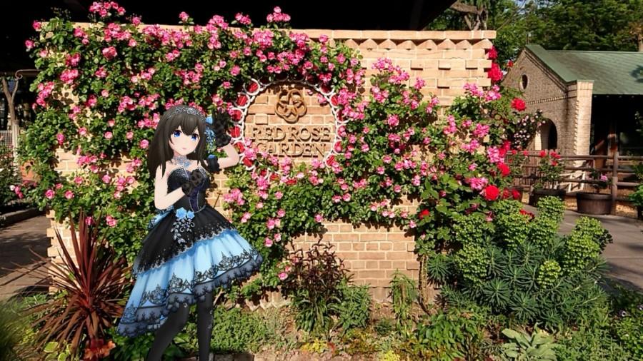 Grădinile japoneze, distruse din cauza coronavirusului. Autoritățile au tăiat mii de trandafiri