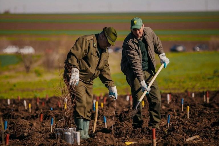 Romsilva a plantat peste 13 milioane de puieți forestieri în perioada Stării de urgență