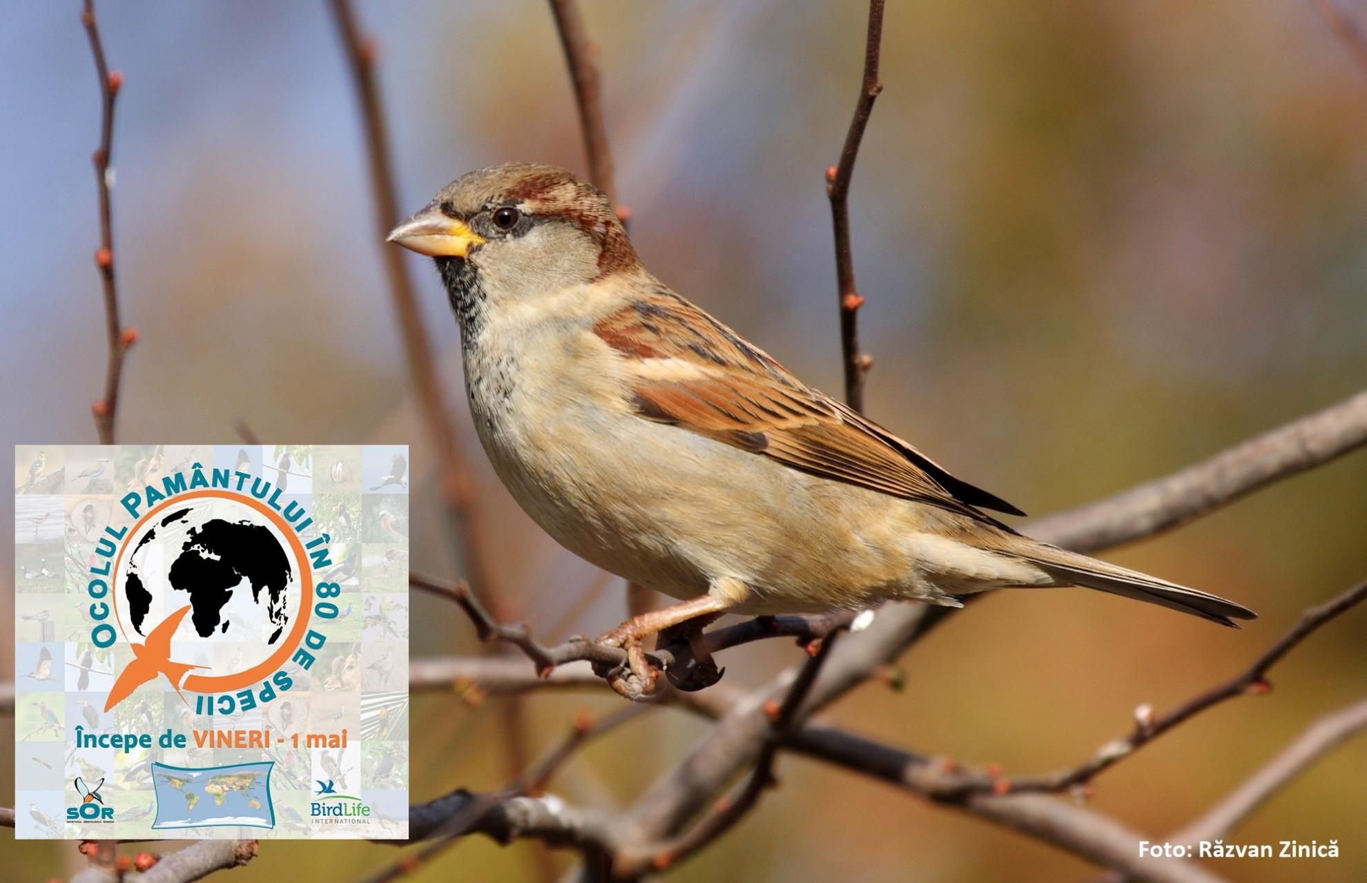 """""""Ocolul Pământului în 80 de specii"""", în timp de pandemie. Proiect inedit al Societății Ornitologice din România"""