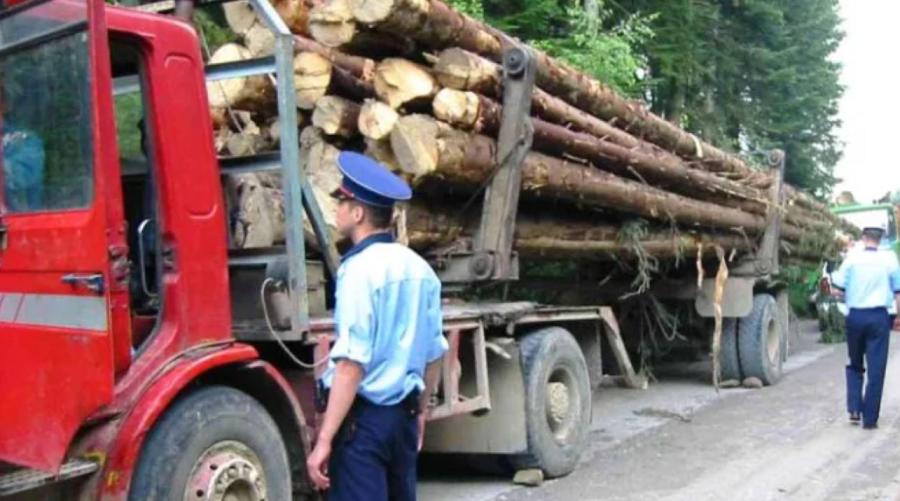 Decizie în Senat! Amenzi sau închisoare pentru cei care fură lemne sau puieţi din pădure