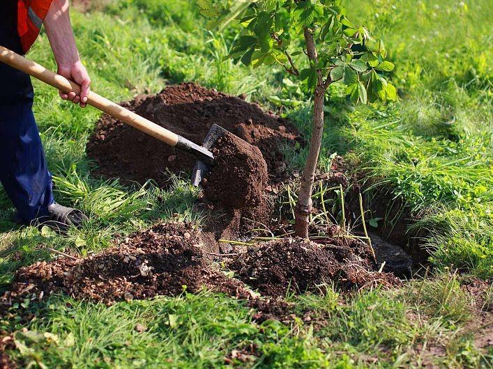 """Peste 600.000 de puieţi, plantaţi în trei ani prin programul de reîmpădurire """"Pădurea de Mâine"""""""