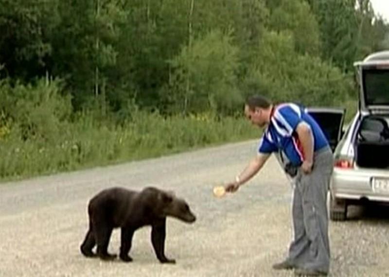 Persoanele care hrănesc urşi la marginea drumului vor fi amendate