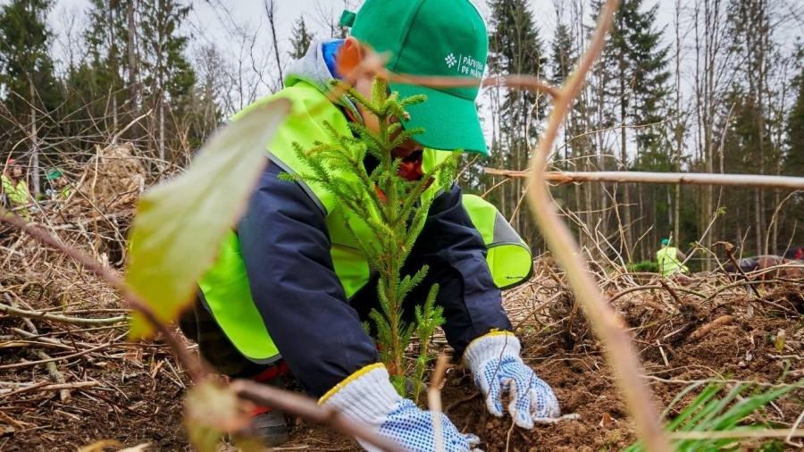 Ministerul Mediului: Începând din primăvară, sunt în curs de plantare peste 2.500 de păduri de la zero şi completate alte 7.000 de păduri tinere