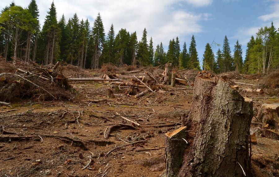 Tăierile la ras din pădurile României ar putea fi interzise pe un milion de hectare
