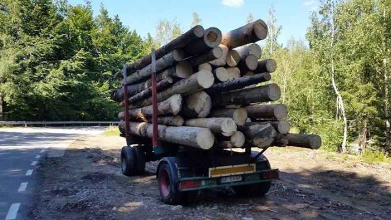 76 de dosare penale și amenzi de peste 250.000 de lei pentru fapte ilicite în domeniul silvic, în ultima săptămână