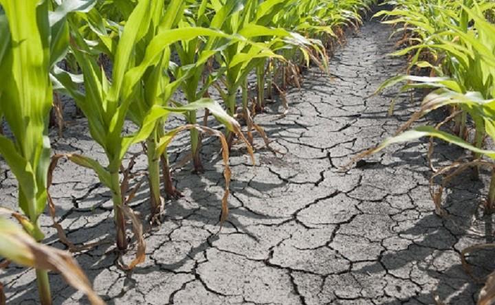 Astăzi este ultima zi în care fermierii mai pot cere ajutor financiar pentru culturile lovite de secetă