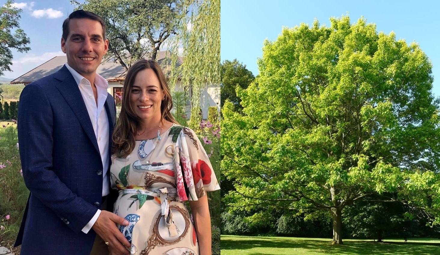 Patru stejari vor fi plantați în România, la nașterea copilului Principelui Nicolae și al soției sale, Alina-Maria