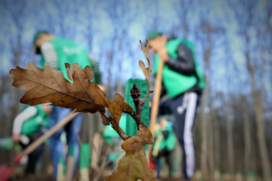 Peste 3,5 milioane de puieți forestieri, plantați în campania de împăduriri de toamnă