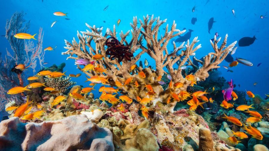 Schimbările climatice distrug ireversibil una dintre marile minuni naturale ale lumii