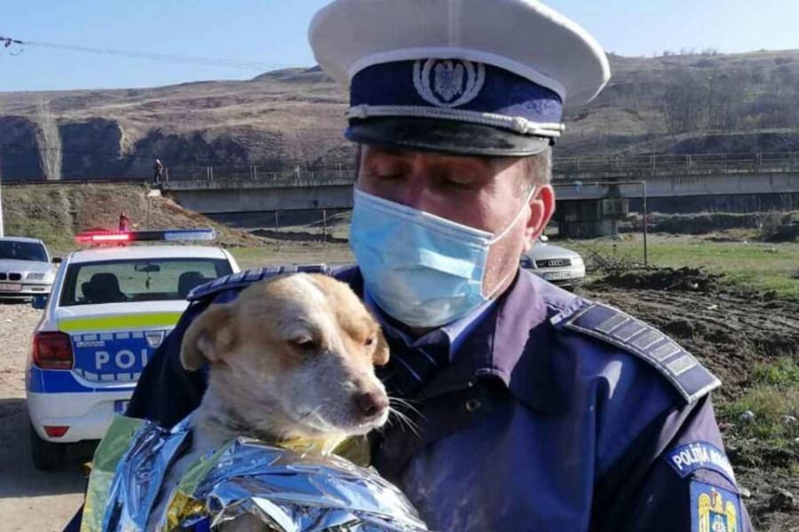 Poliția Protecția Animalelor – MAI scoate la concurs 264 de posturi din sursă externă