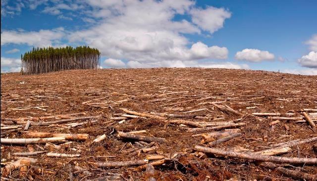 Peste 43 de milioane de hectare de pădure, defrișate la nivel mondial între 2004 și 2017