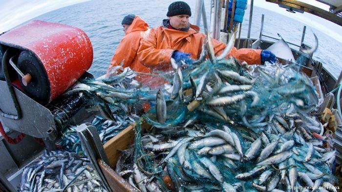 Țărilor UE li se cere interzicerea imediată a plaselor de pescuit și pescuitul excesiv