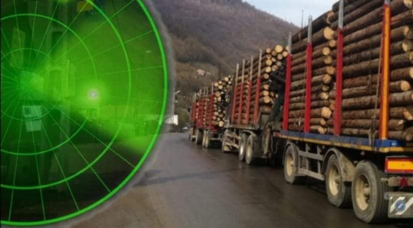 Cum funcționează noul sistem de urmărire a lemnului tăiat