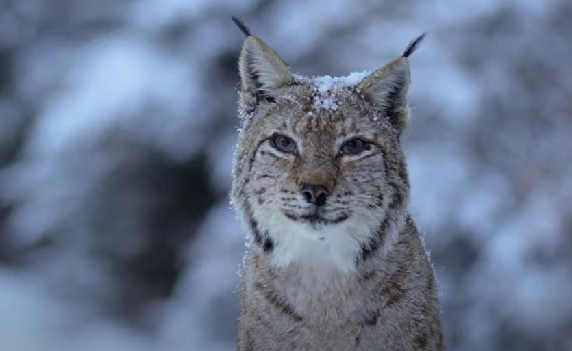 Cel mai spectaculos documentar dedicat naturii din țara noastră va fi distribuit din toamnă în cinematografele din întreaga țară