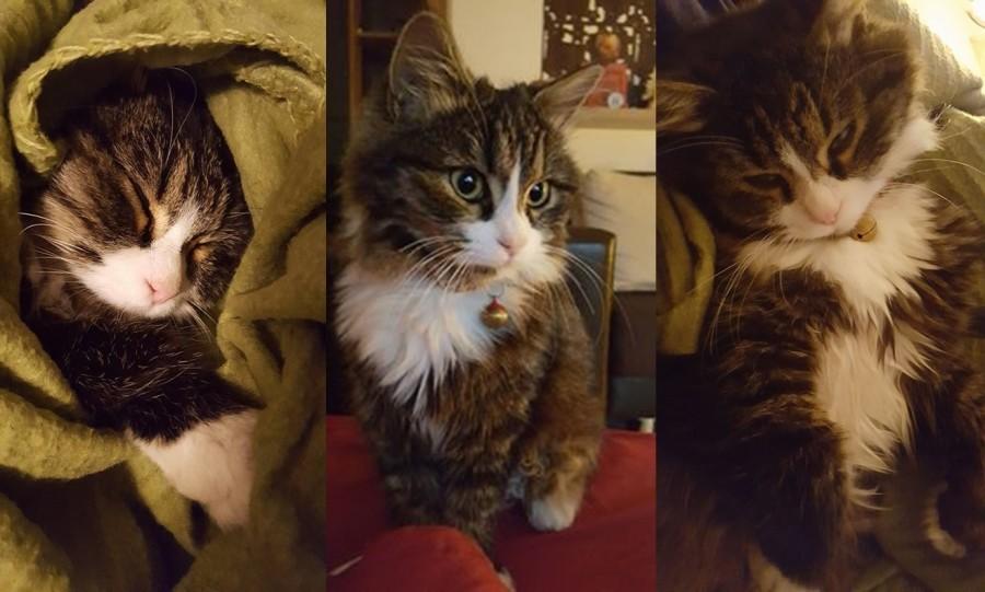 Astăzi e ziua lor, ziua internațională a Pisicilor