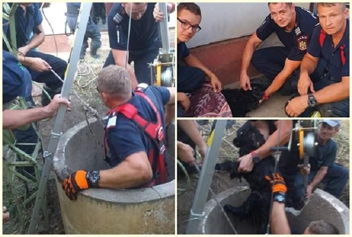 Pentru că orice viață contează! Pompierii arădeni au salvat un cățel căzut într-o fântână adâncă de 12 metri
