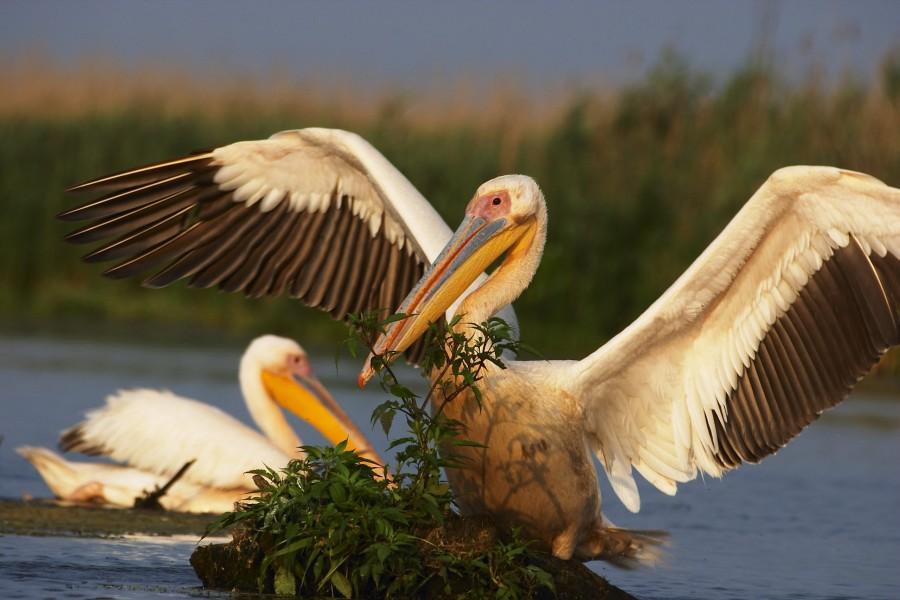 """""""Cântă, zboară, înalţă-te - Ca o pasăre!"""" - Ziua mondială a păsărilor migratoare, sărbătorită în fiecare an la 9 octombrie"""